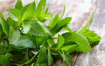 Power of Peppermint