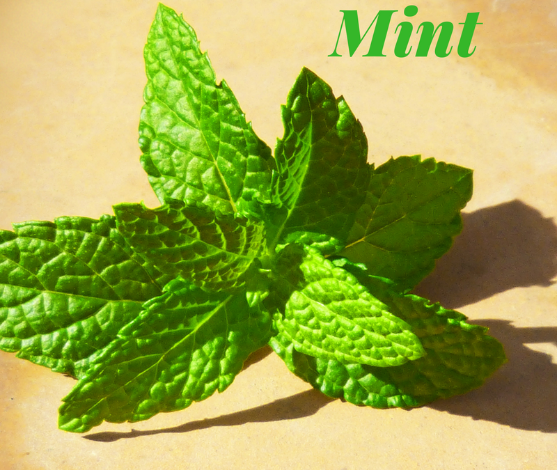 Experi-mint with Mint